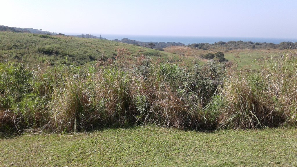 Leisure Bay property for sale. Ref No: 13493228. Picture no 4