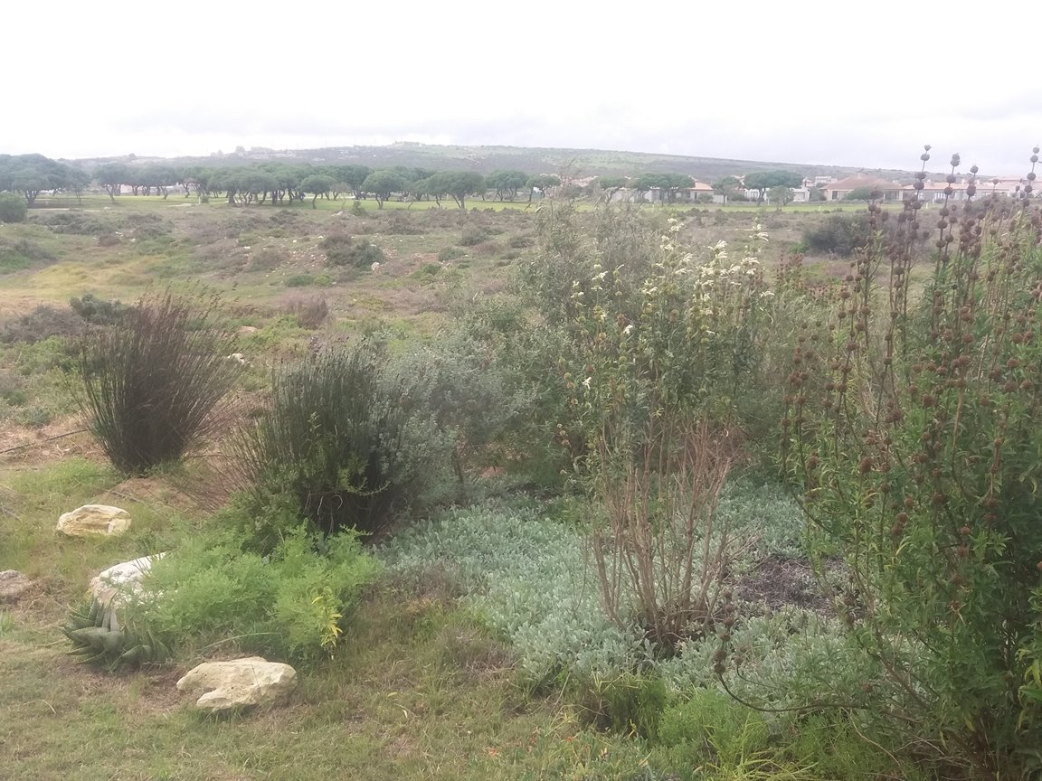 Langebaan Country Estate property for sale. Ref No: 13357976. Picture no 23