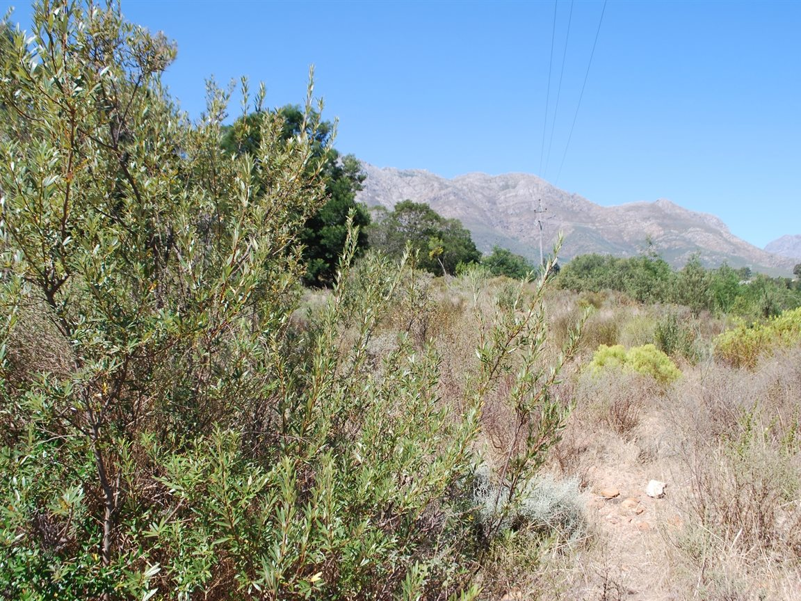 Tulbagh property for sale. Ref No: 12782916. Picture no 1