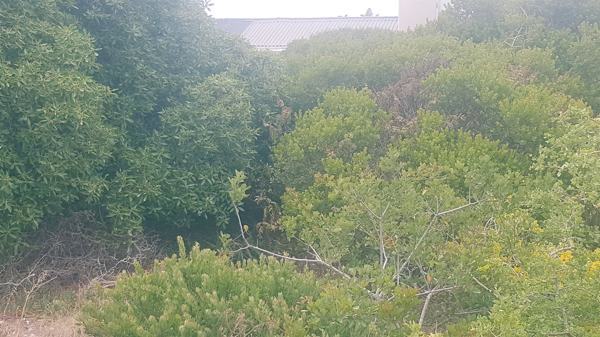 Yzerfontein property for sale. Ref No: 13566918. Picture no 3