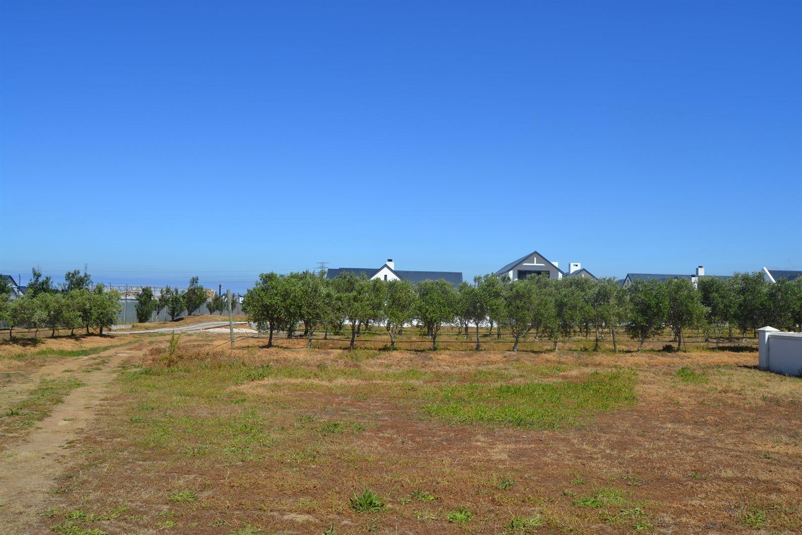 Croydon Olive Estate property for sale. Ref No: 13541527. Picture no 1