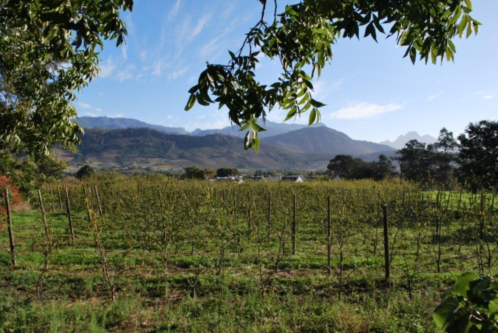 Franschhoek property for sale. Ref No: 13623511. Picture no 4