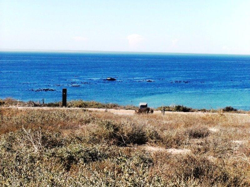 Cape St Martin Private Reserve property for sale. Ref No: 13323570. Picture no 8