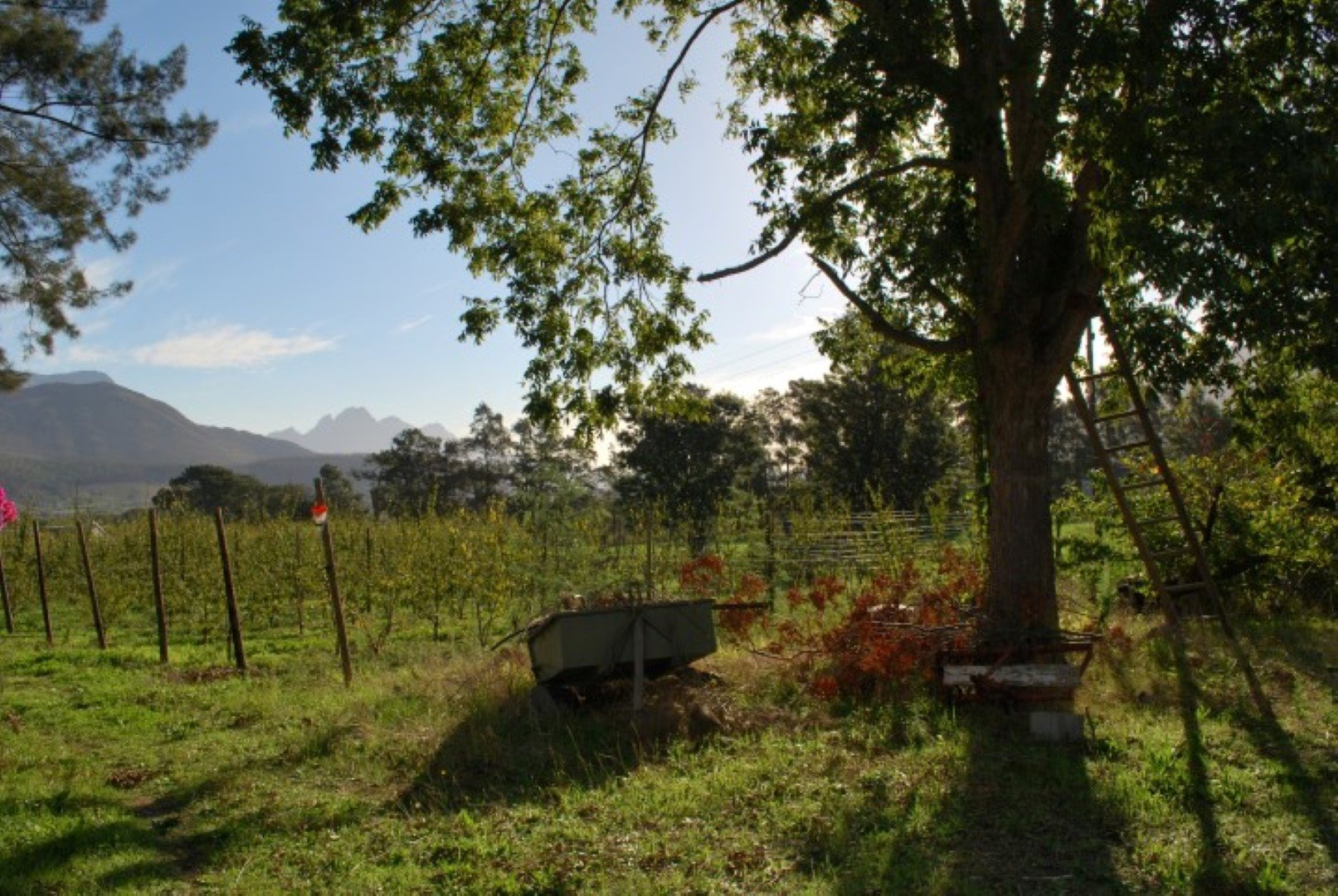 Franschhoek property for sale. Ref No: 13623511. Picture no 11