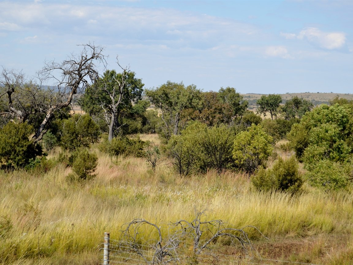 Dinokeng property for sale. Ref No: 13396832. Picture no 25