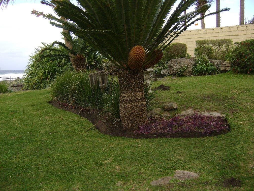 Uvongo property for sale. Ref No: 12795814. Picture no 5
