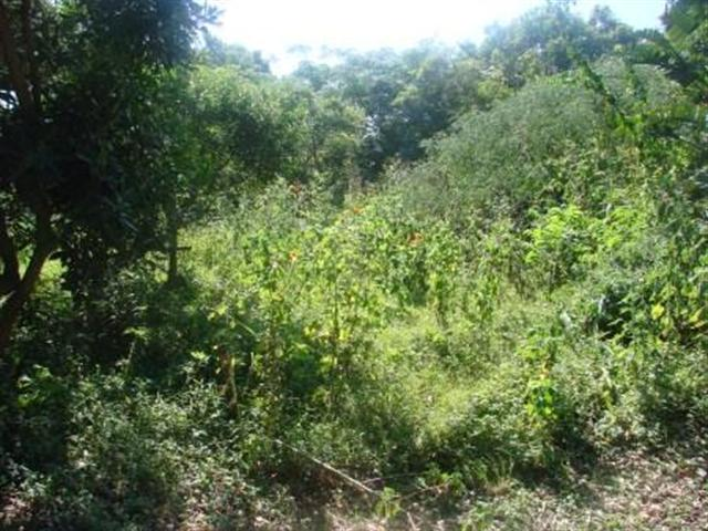Clansthal property for sale. Ref No: 12726797. Picture no 5