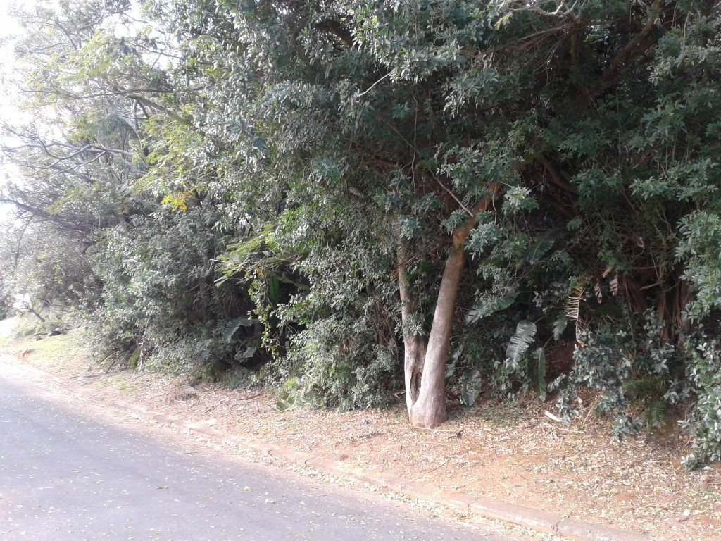 Uvongo property for sale. Ref No: 13354961. Picture no 5