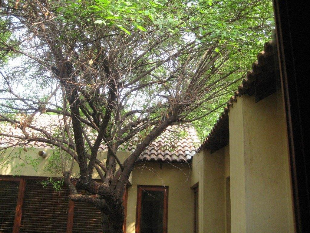 Irene property for sale. Ref No: 13256478. Picture no 8