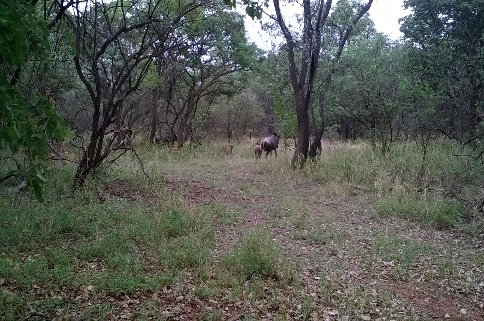 Cullinan Rural property for sale. Ref No: 13521548. Picture no 7