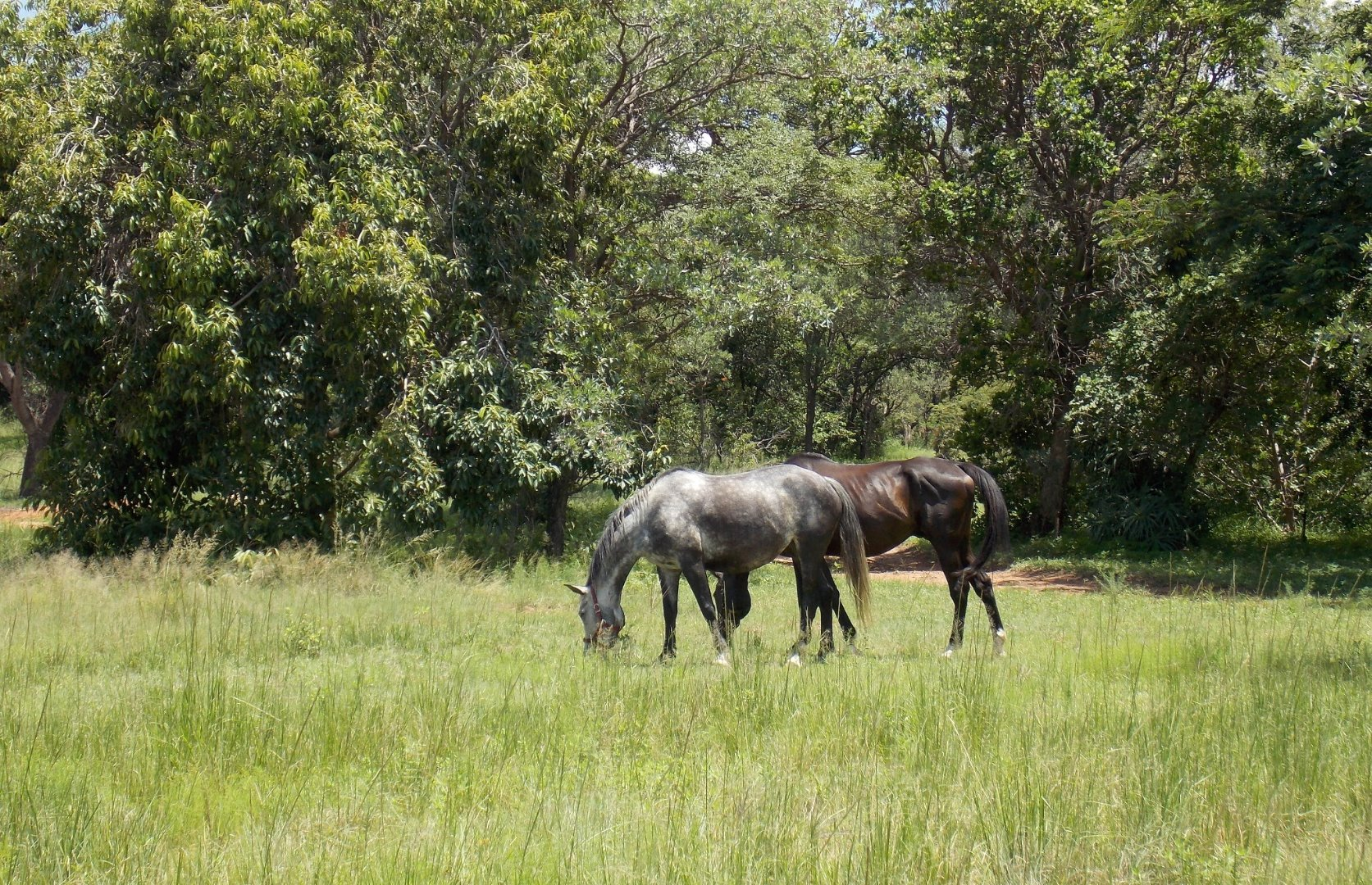 Cullinan Rural property for sale. Ref No: 13521548. Picture no 10