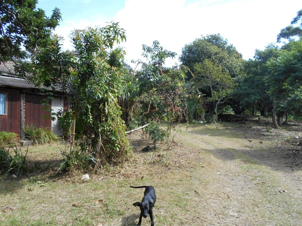 Uvongo property for sale. Ref No: 13325400. Picture no 5