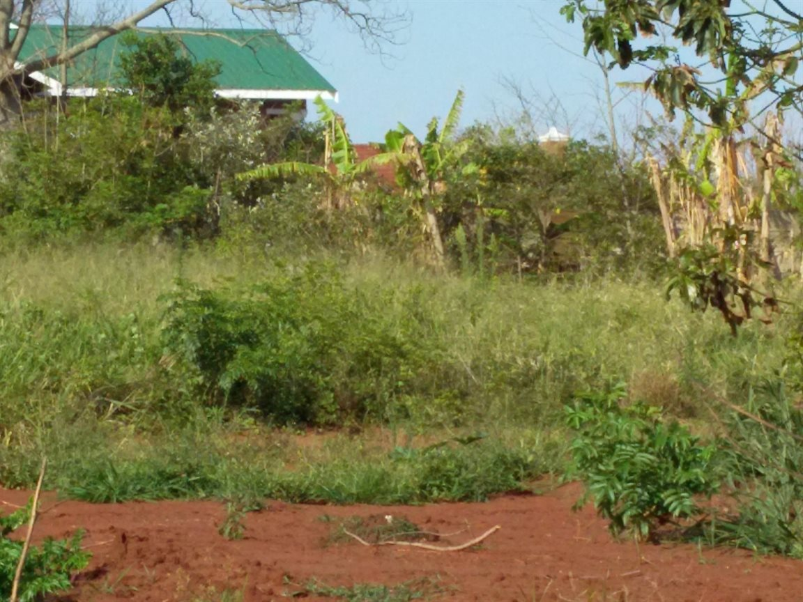Kelso property for sale. Ref No: 13279303. Picture no 5