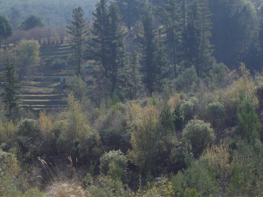 Hogsback, Hogsback Property  | Houses For Sale Hogsback, Hogsback, Vacant Land  property for sale Price:640,000