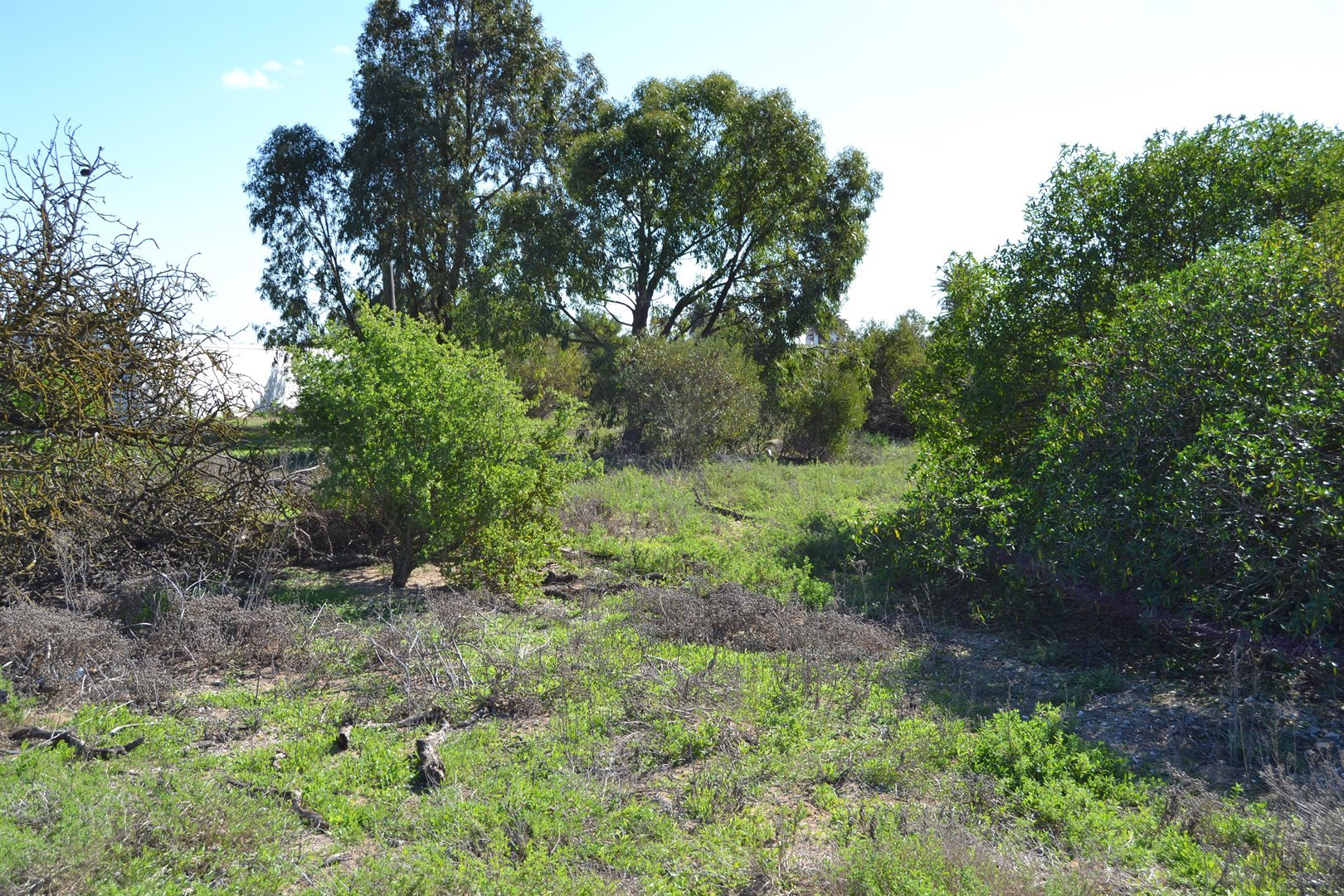 Shelley Point property for sale. Ref No: 13516454. Picture no 10
