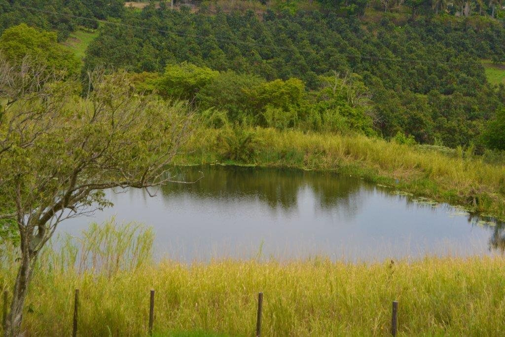 Port Shepstone, Izotsha Property  | Houses For Sale Izotsha, Izotsha, Farms  property for sale Price:4,400,000
