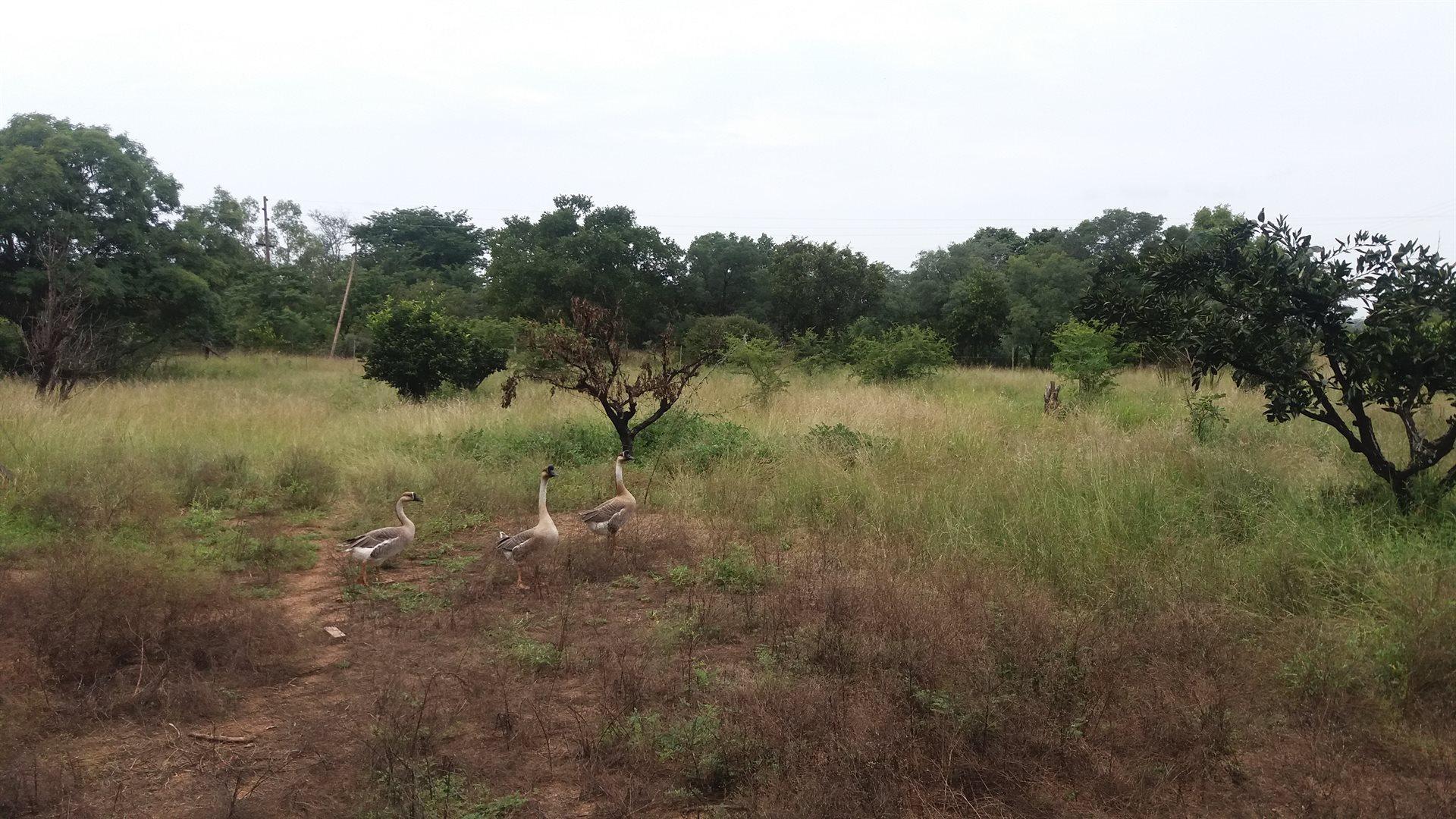 Thabazimbi, Kromdraai Property  | Houses For Sale Kromdraai, Kromdraai, Farms 3 bedrooms property for sale Price:780,000