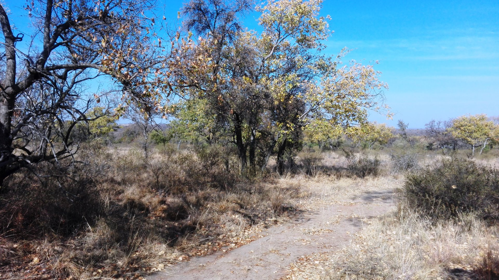 Cullinan Rural property for sale. Ref No: 13521469. Picture no 10