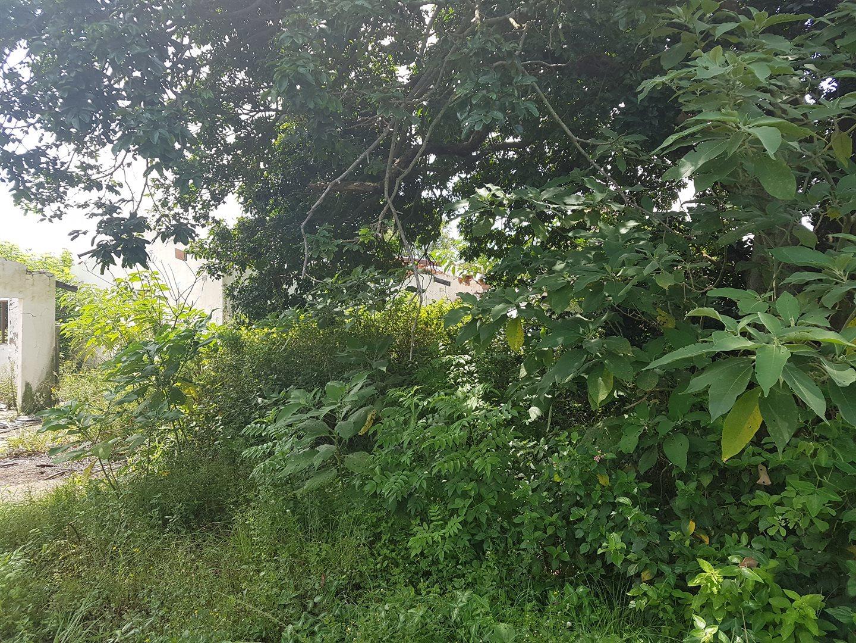Craigieburn property for sale. Ref No: 13591749. Picture no 3