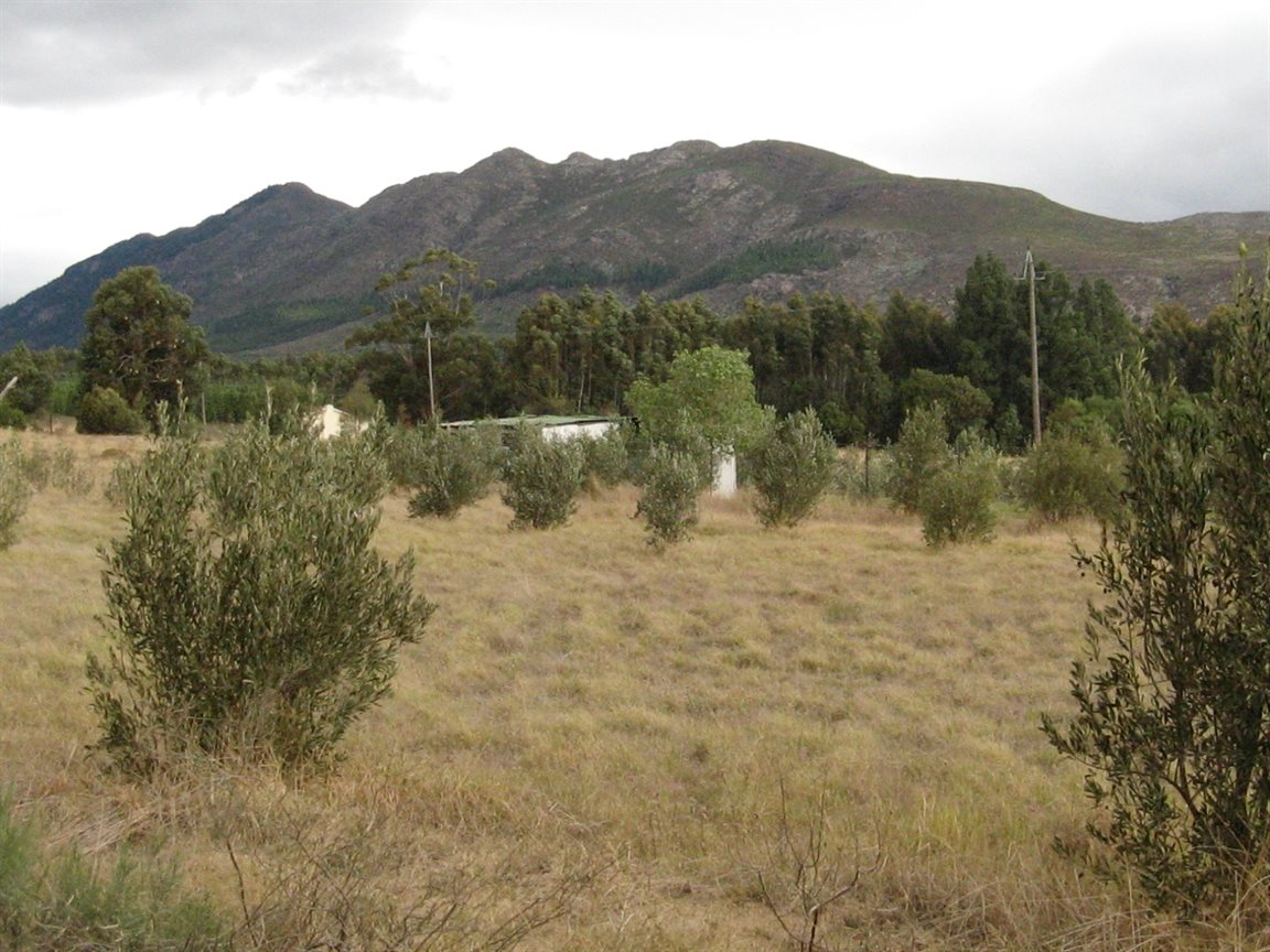 Tulbagh for sale property. Ref No: 12777178. Picture no 6