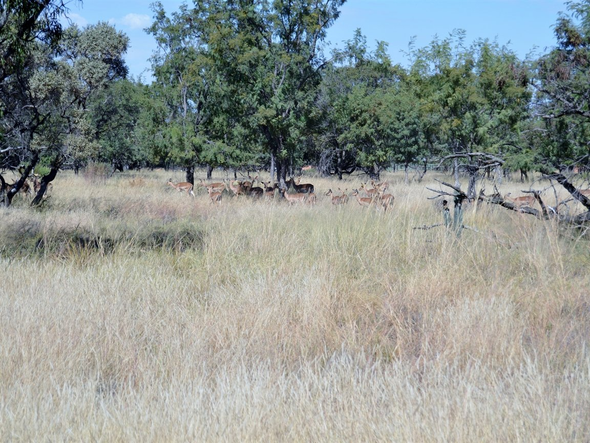 Dinokeng property for sale. Ref No: 13396832. Picture no 24