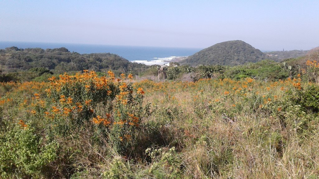 Leisure Bay property for sale. Ref No: 13493233. Picture no 3
