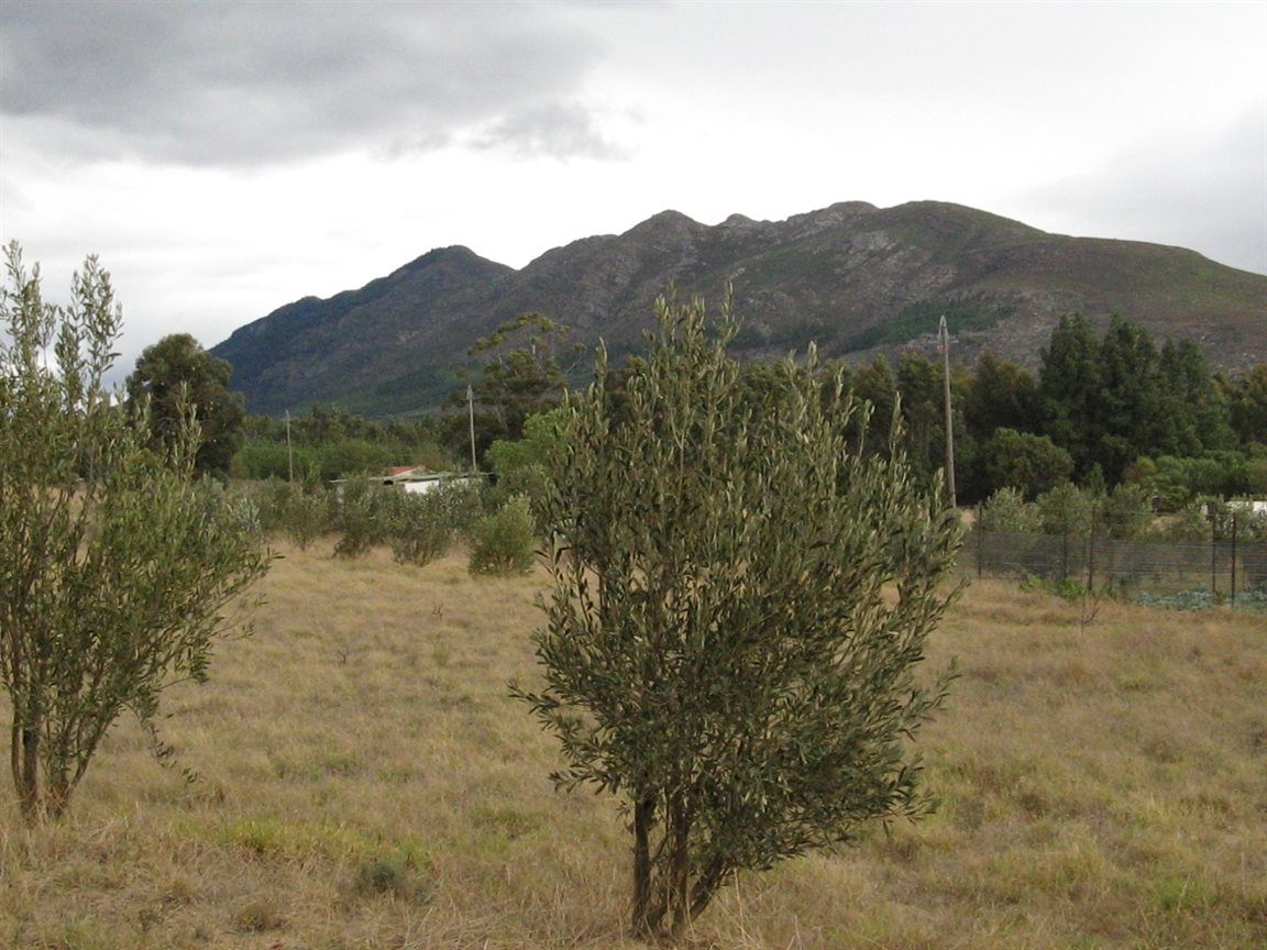 Tulbagh property for sale. Ref No: 12777178. Picture no 5