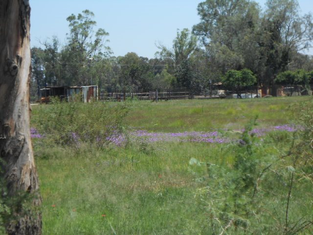 Valley Settlements A H property for sale. Ref No: 13430411. Picture no 3