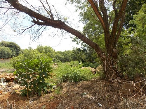 Meyersdal property for sale. Ref No: 13572933. Picture no 3