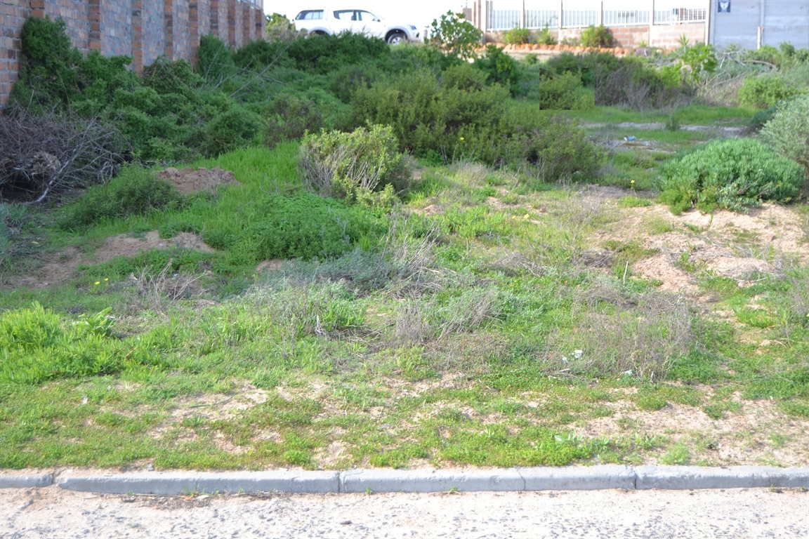 Lamberts Bay property for sale. Ref No: 13378668. Picture no 3