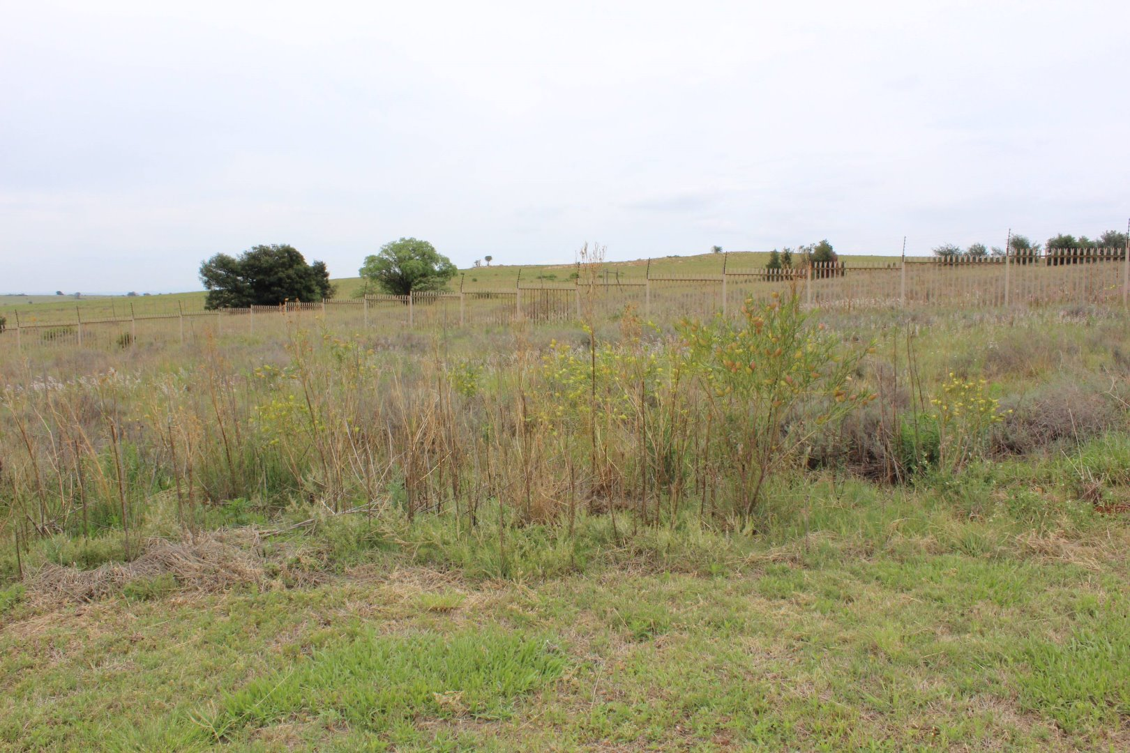Krugersdorp, Wildtuin Park Property  | Houses For Sale Wildtuin Park, Wildtuin Park, Vacant Land  property for sale Price:428,000