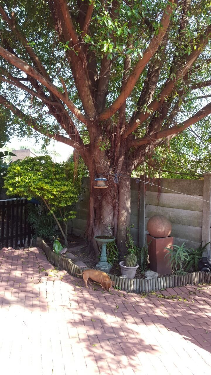 Richards Bay property to rent. Ref No: 13516815. Picture no 18