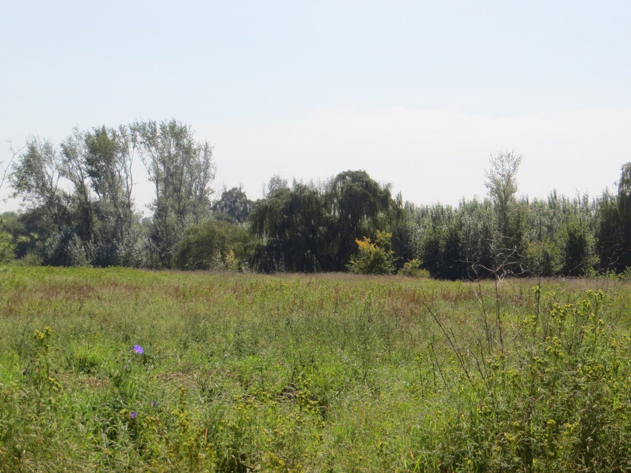 Kliprivier property for sale. Ref No: 13516794. Picture no 17
