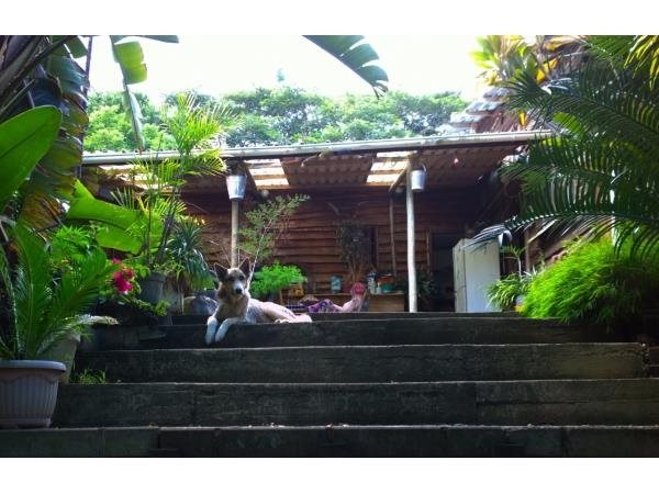 Umzumbe property for sale. Ref No: 13387389. Picture no 8