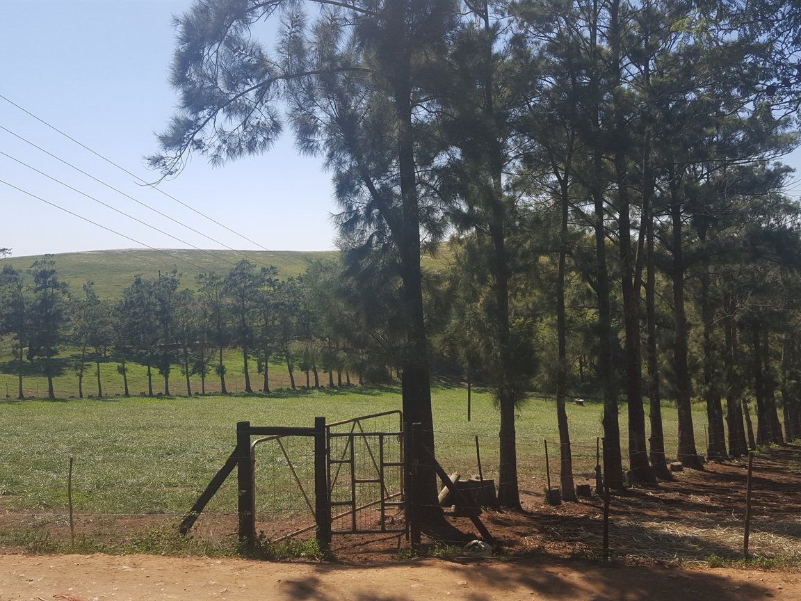 Empangeni property for sale. Ref No: 13324812. Picture no 2