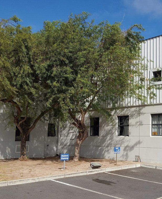 Montague Gardens property to rent. Ref No: 13537828. Picture no 3